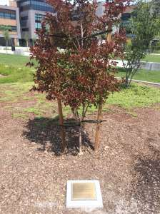 Tree with Plaque